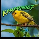 Kanarinio7